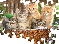 Flowers, basket, five, cats