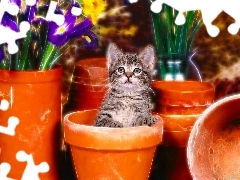 kitten, honeyed, Flowers, graphics, Pots, small