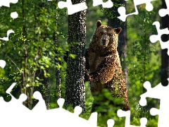 Bear, trees, green, forest