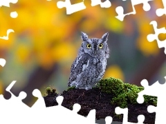 branch, forest, owl