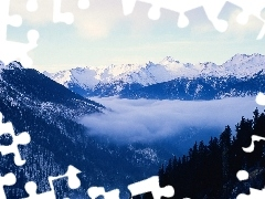 forest, Fog, Snowy, peaks, Mountains