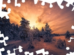 viewes, forest, trees, winter, Great Sunsets, snow