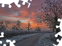 viewes, Way, White frost, Great Sunsets, Bush, trees