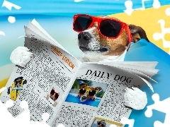 Funny, Paper, Jack Russell Terrier, Glasses
