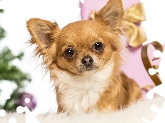 gifts, doggy, Chihuahua