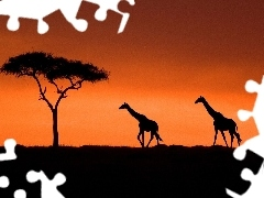 sun, giraffe, west
