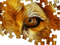 graphics, Lion, eye