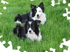 grass, Border Collie, Two cars, puppies