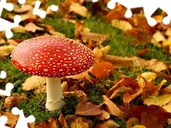 grass, Leaf, Mushrooms, toadstool