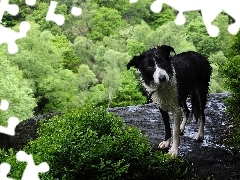 green, height, wet, doggy