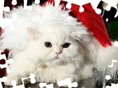 Hat, Christmas, White, cat