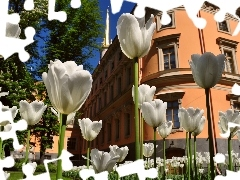 House, White, Tulips