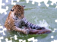 Jaguar, water, trees