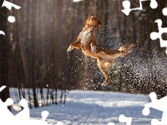 jump, dog, winter, forest