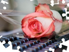 rose, keyboard