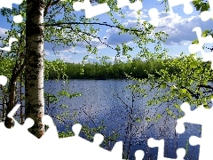 trees, birch, lake, viewes