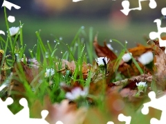 Leaf, droplets, daisies, dry, grass