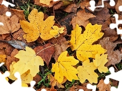 Leaf, Yellow, dry