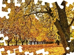 trees, Colours, Leaf, Park, viewes, autumn