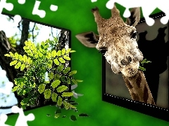 leaves, green ones, TV, 4d, giraffe