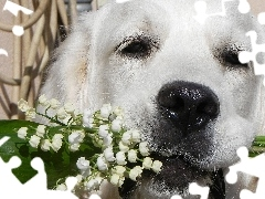 dog, lilies, White
