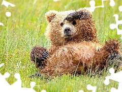small, little bear, grass, Bear