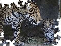 mother, young, wild, cats, Jaguars