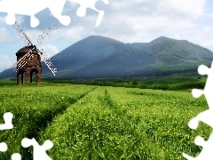 Mountains, woods, field, corn, Windmill
