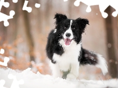 dog, muzzle, snow, Border Collie