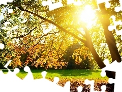 rays of the Sun, viewes, Park, trees