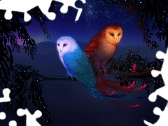 Night, Owls