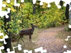 forest, Path, deer
