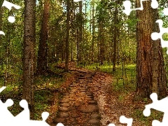 Path, forest, pine