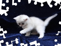 young, kitten, play, White