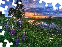 Pond - car, trees, Great Sunsets, viewes, lupine, grass, summer