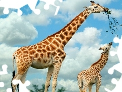 puffs, White, Two, giraffe
