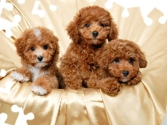 Puppies, Three, Brown
