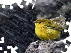 Rain, Yellow, birdies