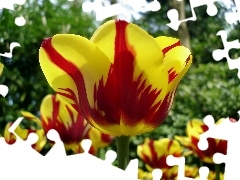 rapprochement, Red, Tulips, blur, yellow