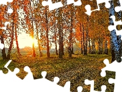 River, birch, sun, Leaf, forest, rays, autumn