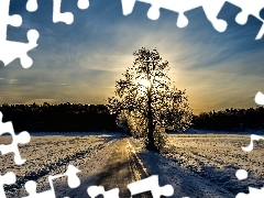 rays, trees, east, snow, sun
