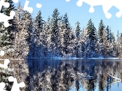 winter, forest, reflection, lake