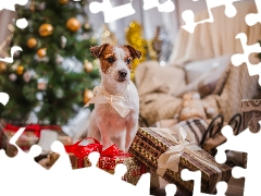 gifts, christmas, Jack Russell Terier, Loop, dog