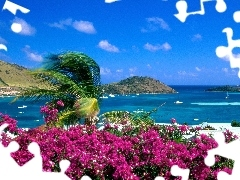 Saint Martin, Flowers, sea, Island