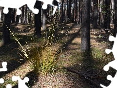 clump, forest, shadows, trees, grass, pine
