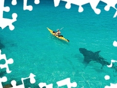 shark, sea, Kayak