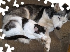 Siberian Husky, dog, sleepy, cat
