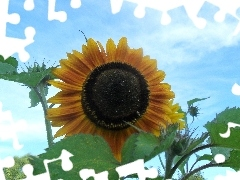 Leaf, Sky, Sunflower