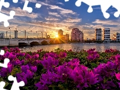 Flowers, skyscrapers, town, rays, panorama, bridge, River, sun
