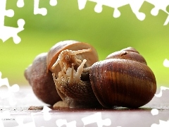Snails, Shells, Two cars